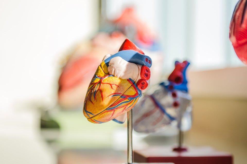 Teach Science Abroad - heart